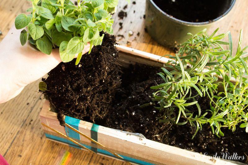 Bring-the-garden-indoors