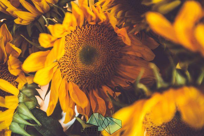 Fall-floral-workshop
